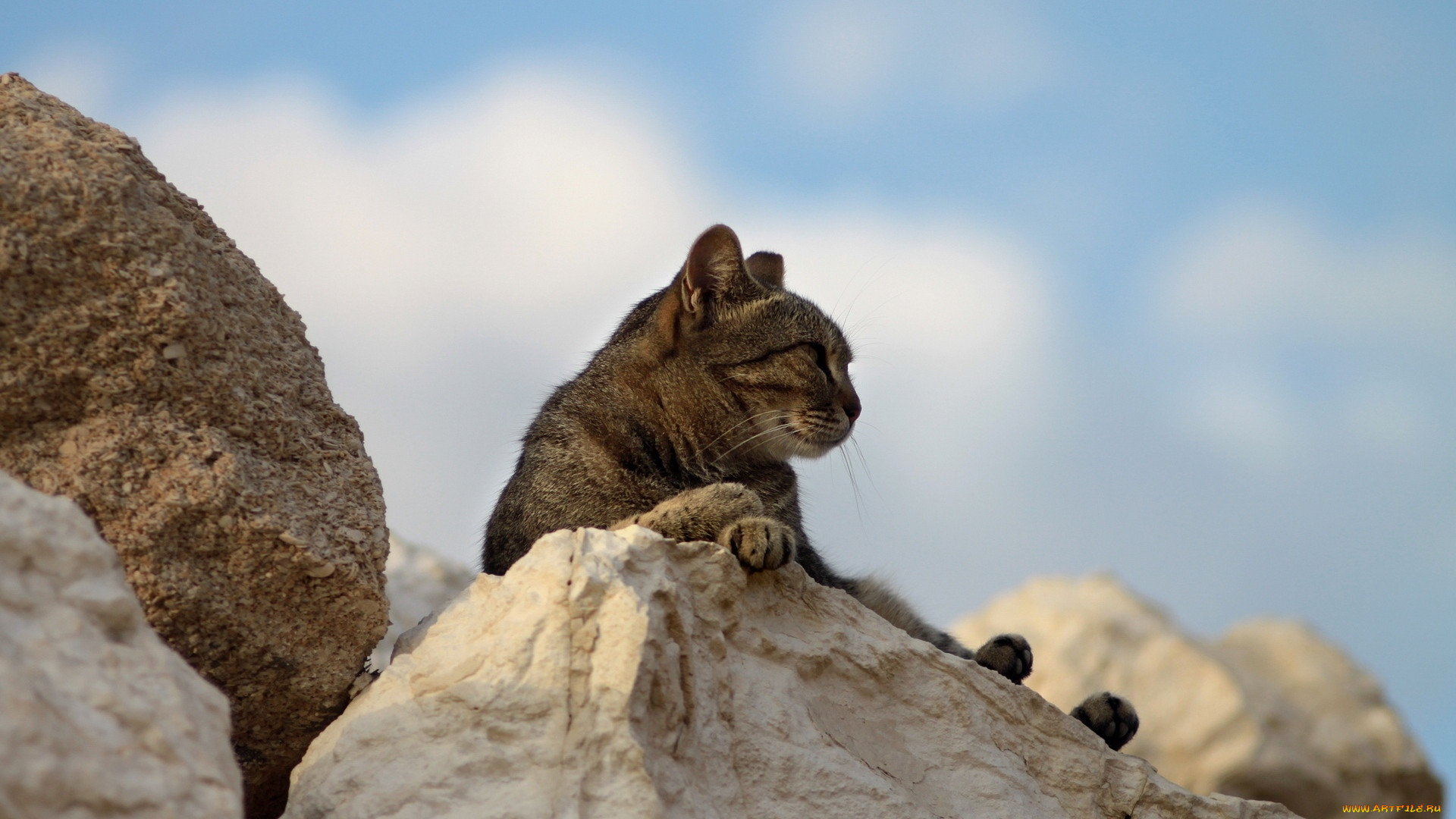 один картинки с котами в горах пробор стрижки